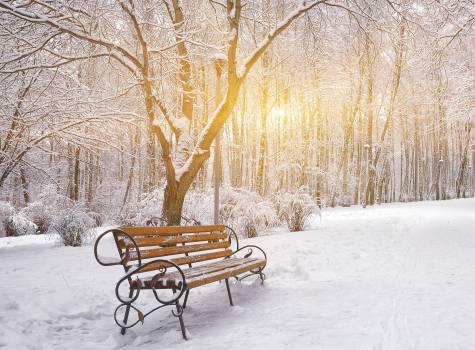 Zimní vitalita